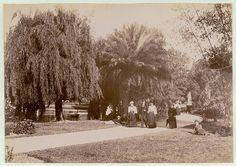 Botanical Gardens, Sydney, c. 1900-1910 | Flickr - Photo Sharing!