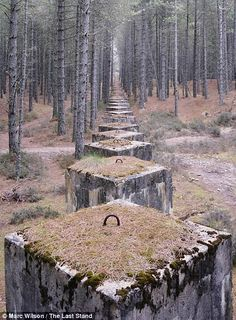 The last stand: Eerie photos capture man-made remnants of the Second World War that have become part of our coastal landscape         Marc Wilson, 46, travelled 23,000 miles to photograph 143 sites in Britain, France, Denmark, Belgium and Norway: (pic:Concrete tank defences in the forests near Lossiemouth, Moray)