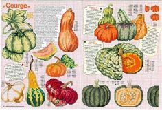 Gallery.ru / Фото #36 - Encyclopedie, fruits, legumes et autres gourmandises - tymannost