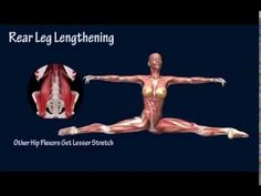 How to Front Split Open Muscle Anatomy Training Program EasyFlexibility