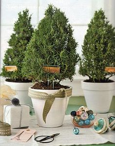 Cute idea for a Christmas hostess gift -- a small potted rosemary plant (or evergreen) ...