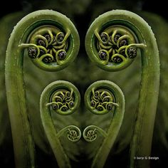 Image result for silver fern frond