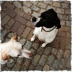 my lovely #dogs
