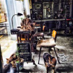 achara_sun___449さんの、Overview,照明,雑貨,アンティーク,ハンドメイド,セリア,モノトーン,アメリカン,ミシン台,フェイクグリーン,インダストリアル,ヴィンテージ,Instagram,美容室,ステンシル,男前,ねこ部,swaro109 vintage ,