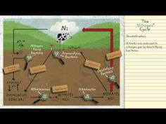 Nitrogen Cycle Week 4 5th Grade Science, Science Fun, Teaching Science, Science Education, Earth Science, Life Science, Ap Environmental Science, Nitrogen Cycle, Classical Education