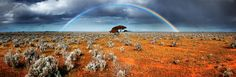 savana rainbow