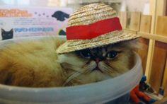 Trending in Tokyo: Cat Cafés