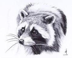 Картинки по запросу пантера рисунок