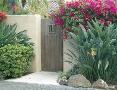 Tropical Plants, Rustic Gate, Stucco Wall Gates and Fencing Landscaping…