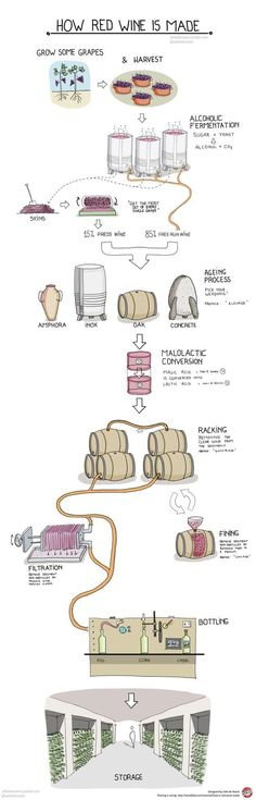 How is red wine made? See how red wine is made with an easy-to-understand infographic. There are 5 basic steps to making red wine starting with harvesting the grapes. Wine Infographic, Wine Facts, Wine Folly, Chateauneuf Du Pape, Wine Education, Wine Guide, In Vino Veritas, Wine And Beer, Wine And Spirits