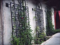 See how they are away from the wall to allow for more growth- remember this!  Metal Vegetable Garden Trellis