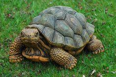 tortoise | Lively Tortoise/Turtle