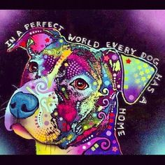 In a perfect world,   every dog has a home