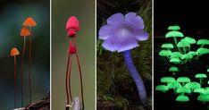 Fantastic Fungi: The Startling Visual Diversity of Mushrooms Photographed by Steve Axford