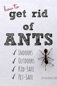 Great Pin How To Get Rid Of Ants