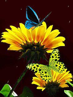 Бабочки на подсолнухах - анимация на телефон №1253822