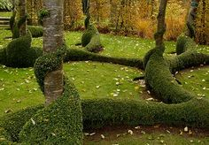 Clipped boxwood curls like sepents along the trunks of apple trees to create an unforgettable design.