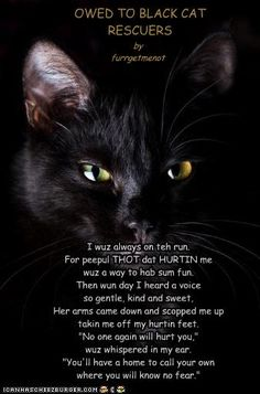 Black cats are less likely to be adopted from shelters partly due to the old wives tale of them being bad luck. They are sweet and loving and should be given a chance.