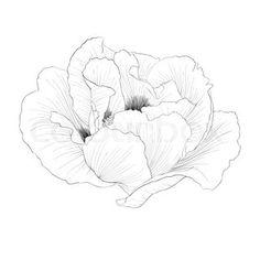 flower transparent - Google Search