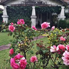 The rambly old roses of rambly old Kew. #otherpeoplesgardens #oldroses #floralfriday #pinkroses #flowerrave Photography: The Dilettante Gardener