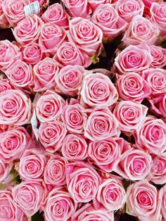Newest Absolutely Free light Pink Roses Popular Prepared to plant and grow roses in the backyard? Our Growing Guide for Roses provide started—with