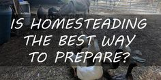 Is Homesteading the Best Way to Prepare?