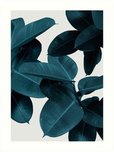 Foliage, Plant Leaves, Botanical Pattern, Rubber Plant von PrintsProject