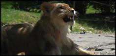 My Trip in Bronx Zoo