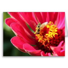 Bee Bloom ~ Itasca State Park, Minnesota.  Order this greeting card online at:  http://www.zazzle.com/bee_bloom_greeting_card-137269174587106010?CMPN=addthis=en