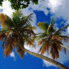 Look up! Visit Caneelbay.com for more info about Caneel Bay Resort.