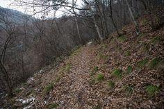 【聖山 坊平】登山百景-緩やかに登っていく