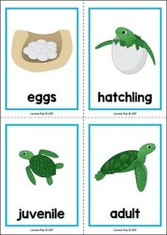 Ocean Preschool Centers Ocean Preschool and Kindergarten Center Activities. Life cycle of a sea turtle. Ocean Lesson Plans, Preschool Lesson Plans, Preschool Themes, Preschool Science, Preschool Activities, Sea Turtle Life Cycle, Reptiles Preschool, Turtle Book, Ocean Activities