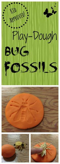 (Kid-Approved!) Play-Dough Bug Fossils {Prairie Gal Cookin'}