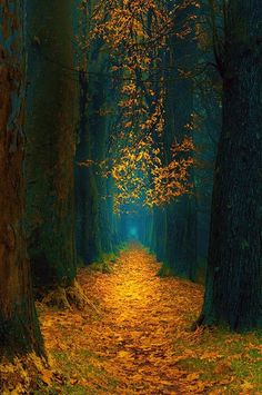 Autumn Scenery, Autumn Nature, Autumn Forest, Nature Nature, Dark Forest, Mother Nature, Beautiful Nature Wallpaper, Beautiful Landscapes, Beautiful Nature Photos