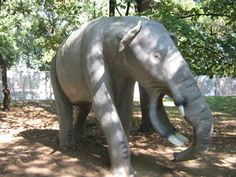 Prehistoric Elephant Pictures: Platybelodon