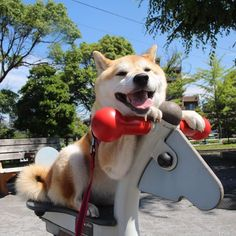 Happy doggo's wild ride