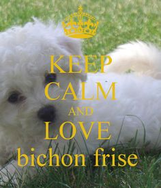 KEEP CALM AND LOVE bichon frise - KEEP CALM AND CARRY ON Image Generator