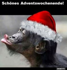 Schönes Adventswochenende! Winter Christmas, Grinch, Humor, Animals, Advent Season, Christmas Time, Farts Funny, Animales, Animaux