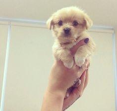Cute little puppy  #puppy #dog #cute #pet