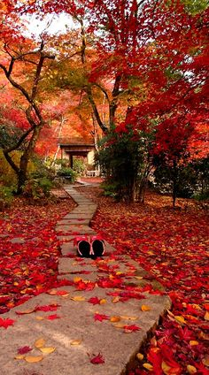 Autumn in Kyoto, Japan. Kyoto is a city located in the central part of the island of Honshu.