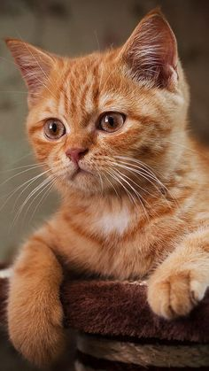 """** """"What's she mean, 'get me some ginger?"""""""