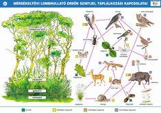 az erdő szintjei - Google keresés