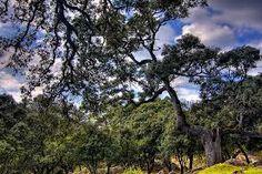 Bosque mediterráneo típico. Fuente: Goyo Ambrosio. Las precipitaciones se producen durante otoño, invierno y primavera,