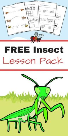 FREE Insect Lesson Pack! Great for Preschool, Kindergarten, First Grade, and Second Grade. Great addition to your insect study unit!