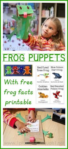 Adorable frog puppet craft with frog facts printable to learn more about the frogs! Red Eyed Tree Frog and other frogs included. Great for a frog unit study! Rainforest Theme, Rainforest Project, Frog Puppet, Frog Facts, Fall Preschool, Kindergarten Science, Frog Theme, Red Eyed Tree Frog, Learning Activities