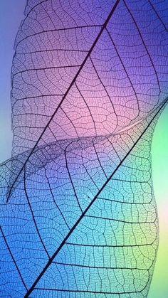 Wallpaper Iphone Cute, Cellphone Wallpaper, Colorful Wallpaper, Galaxy Wallpaper, Aesthetic Iphone Wallpaper, Flower Wallpaper, Screen Wallpaper, Nature Wallpaper, Aesthetic Wallpapers