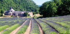 Senanque Abbey, close to Aix-en-Provence, France. I can almost smell the lavender!