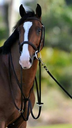 I have a soft spot for bays with blazes. They remind me of my third (and favourite) horse.