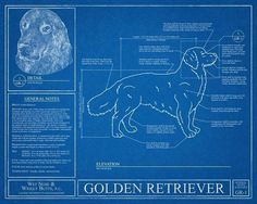 Golden Retriever Blueprint. This Golden Retriever blueprint is a wonderful piece of art that will make a great gift! Optional: Personalize this print with the name of your dog(s)! Size: 16x20 The blueprint is printed on high quality photo paper. No framing is included. Color Options: Standard - Looks new, like a clean finished product. Vintage - Background will appear faded and worn in some areas. All vintage effects are purely digital. The same high quality photo paper is used in each...