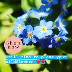 Get your wildflowers in xx Bee Friendly, Wildflower Seeds, Growing Seeds, Small Garden Design, Personalized Wedding Favors, Natural Garden, Garden Gifts, Garden Planning, Say Hello